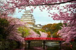 Himeji Castle with Red Bridge While Cherrry Blossoms Viewing Festival, Kyoto Japan, this immage can use for asia, travel, japan, japanese and kyoto concept