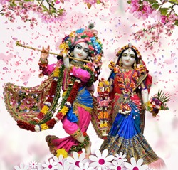 Hindu God Radha Krishna Iskcon Temple With Nice Dressup And Rose Petals background  Wallpaper Design