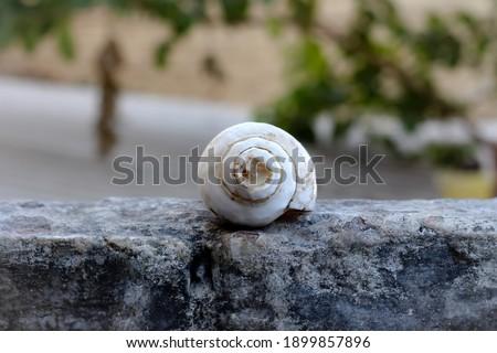 Hindu worship shankh. Hindu use this shankh during worship. Stock photo ©