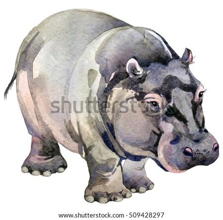 hippo. african animals. watercolor animal illustration