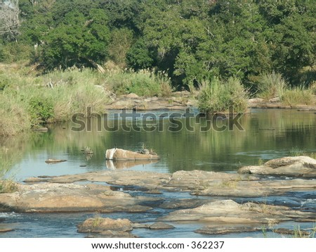 Hippo family in the Sabie river pool