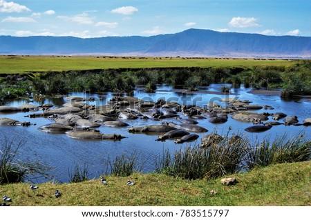 Hippo pool, Ngorongoro Crater, Tanzania