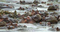 Hippo Pool  Serengeti Tanazania Africa