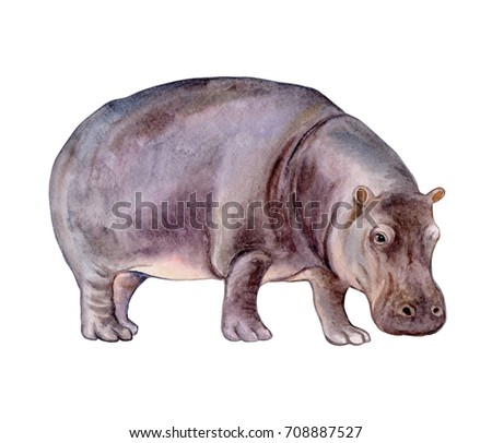Hippopotamus. Hippo isolated on white background. Watercolor. Illustration. Template Clip-art.