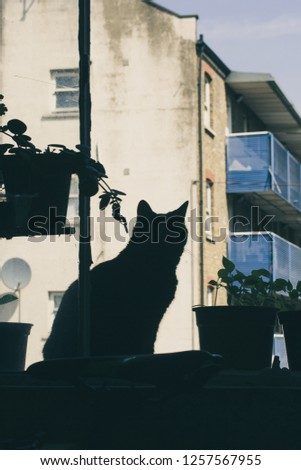 Hipster cat in a hipster flat on a hipster window. #1257567955
