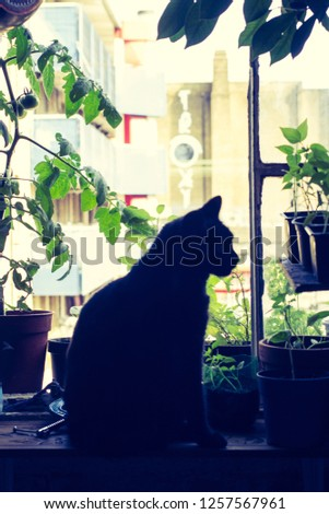 Hipster cat in a hipster flat on a hipster window. #1257567961