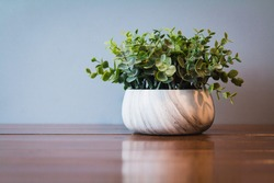 Hipster green plant in white bowl on wooden tabletop/ wooden shelf with blue background. Green plant for house decoration and beautiful simple bowl with stripes. Leafy beautiful and simple style