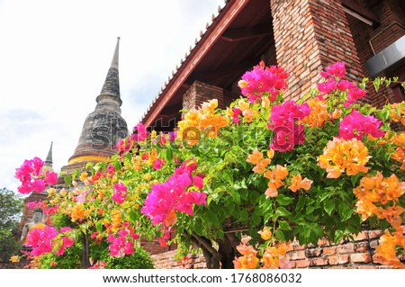 Historic buildings and colorful flowers ストックフォト ©