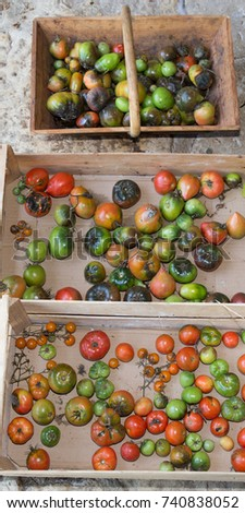 historic old tomato variety Different varieties of tomatoes rare species #740838052