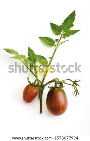 Historic variety of tomato, plum tomatoes