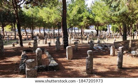 Historical Muslim Graveyard with pine trees Stok fotoğraf ©
