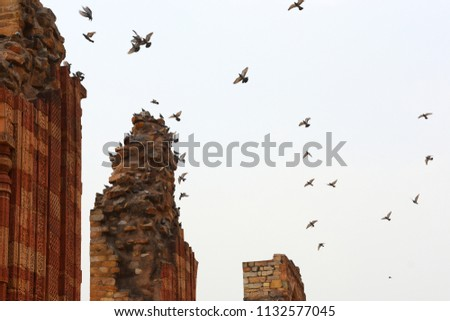 Historical Place : Qutub Minar, Delhi, India #1132577045