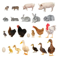 History of development of animals