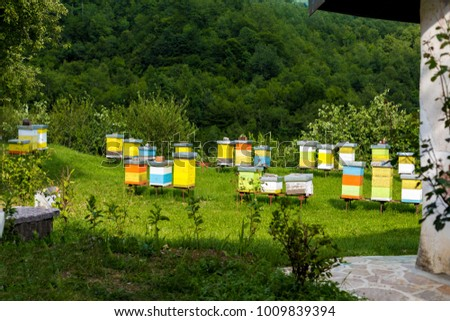 Hives of bees in the apiary