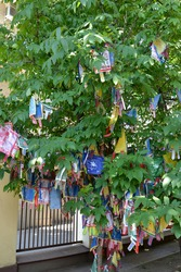 Hiymorin, color Buddhist tags with a prayer hang on a tree
