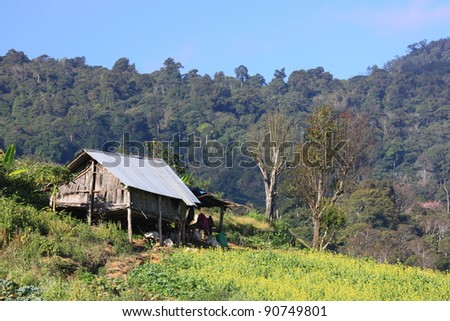 Hmong's House in the Biggest Cabbage Field in Phetchaboon, Thailand
