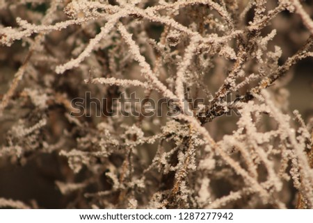 Hoar Frost at Night  #1287277942