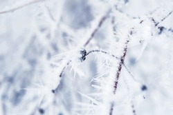 Hoarfrost and snow on the trees in winter forest. Macro image with small depth of field
