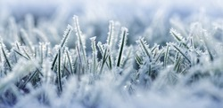 Hoarfrost on blades of grass close up. Nature background.