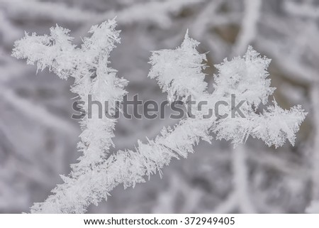 Hoarfrost on branches #372949405