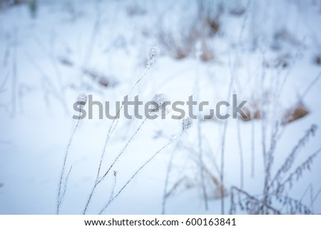 Hoarfrost on plants. Winter abstract macro of rime on plants. #600163841