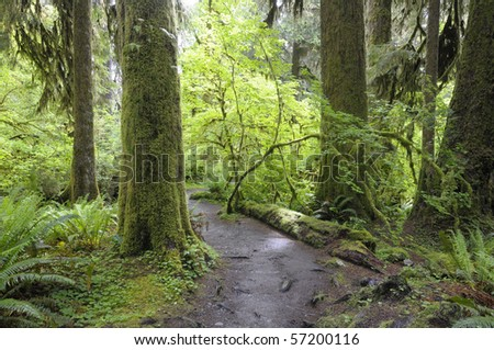 Hoh rain forest at Olympic National Park, Washington state