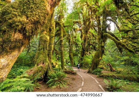 Hoh rain forest in olympic national park, washington, usa #474990667
