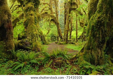 hoh rain forest in olympic national park, washington, usa