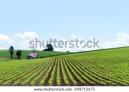 Hokkaido farmland scenery with bright blue sky, low clouds and small farmhouse - wide open space