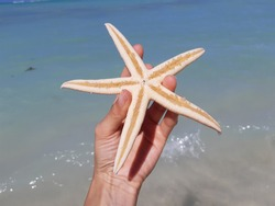 Holding a dead starfish which was washed ashore