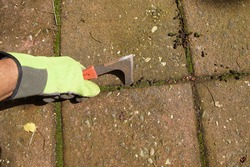 Holding a grout scraper or weed scraper for removing moss and weeds in tile joints. July, Netherlands,