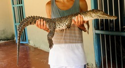 Holding a little crocodrile