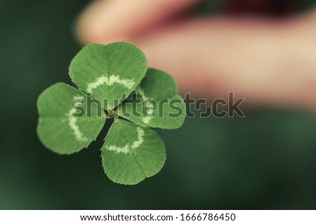 Holding a lucky four leaf clover, good luck shamrock, or lucky charm. Foto d'archivio ©
