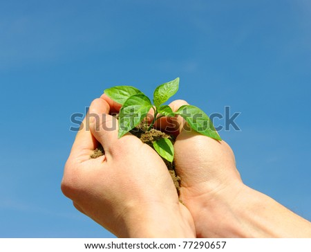 holding a plant between hands on sky