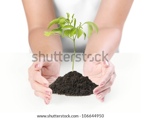 holding a plant on a white background - stock photo