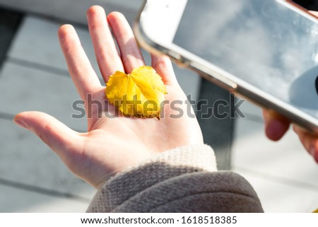 Holding a yellow leaf in the palm and taking photo of it,