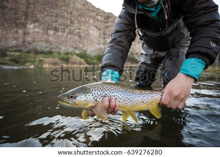 Holding Brown Trout