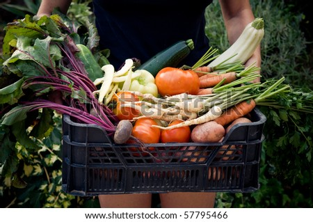 Holding crate with fresh vegetables