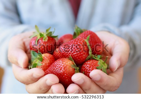 holding fresh strawberry in hands #532296313