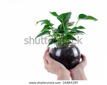 Holding Green Plant