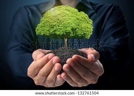 holding green tree in hand