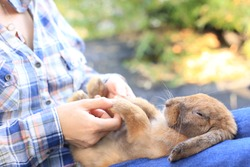 Holding hand each other with her pet. Adorable adult rabbit in woman's arm with care and love tenderly. Farmer holds bunny and friendship in nature. Promise between pet's owner and her animal.