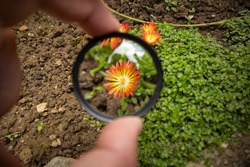 Holding magnifier glass in my hands and enlarging flower far away