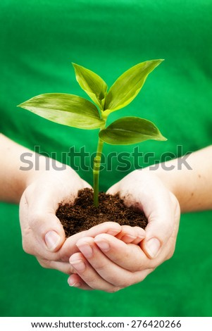 Holding seedling in hands Environment and nature protection concepts