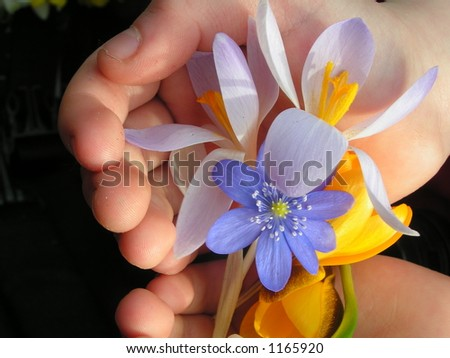 Holding spring flowers