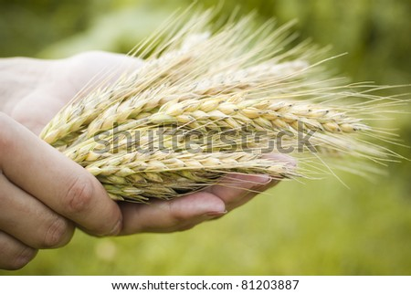 Holding Wheat