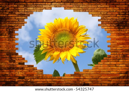 Hole in old brick wall with view on field with sunflower and blue sky
