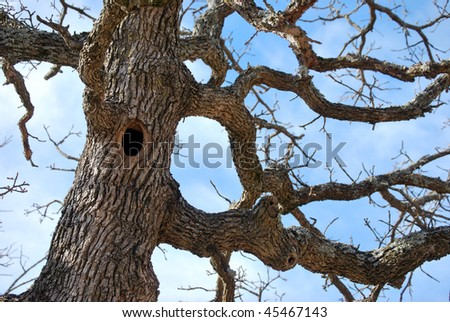 Hole In Tree Trunk