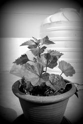 holga ish plant image. selective focus on plant.