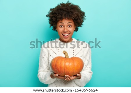 Holiday food, autumnal harvest concept. Happy African American woman holds orange pumpkin, wears white sweater, enjoys fall season, shows homegrown vegetable, smiles gently, isolated on blue wall
